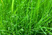 Wet green grass