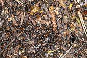 Lots Of Ants