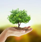 Human hands holding a tree