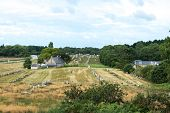 Megalithic Site Around Carnac (france)