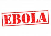 picture of hemorrhage  - EBOLA red Rubber Stamp over a white background - JPG