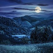 Pine Trees Near Meadow In Mountains At Night