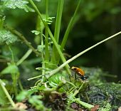 foto of orange poison frog  - An image of a beautiful little orange frog - JPG