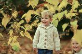 boy and yellow foliage