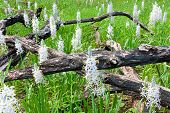 Hyacinth Regrowth