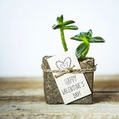 Happy Valentine's Day. Succulent In Concrete Pot With Gift Tag