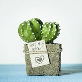 Happy Valentine's Day. Cactus In Concrete Pot With Tag Don't Be Prickly