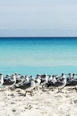 picture of yucatan  - Seagull on the Cancun beach - JPG