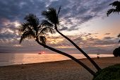 image of pacific islands  - Silhouette of coconut palm trees at sunset from the beaches of Kaanapali resort on the tropical island of Maui - JPG