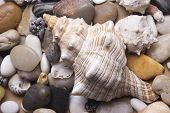 Natural spa elements-Sea shells