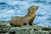 image of sea lion  - wet sea lion in san cristobal galapagos islands ecuador - JPG