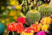 All Cactus