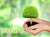 Small tree in hand on nature background