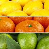 Citrus fruits in colorful collage