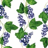 pic of bine  - vector seamless pattern with branches of black currants drawing by watercolor - JPG