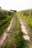 Countryside Gravel Road