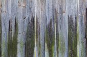 Old Wooden Planking Wall Covered With Green Moss