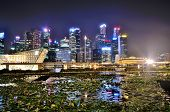 picture of singapore night  - Singapore Skyline at night from Marina Bay with lights glistening and a pond of floating plants in the foreground - JPG