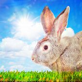 Happy rabbit on a green grass against sunny sky.