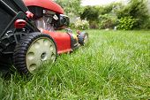 picture of lawn grass  - Red Lawn mower cutting grass - JPG