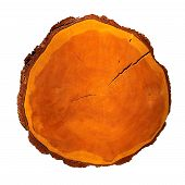 Wooden Stump