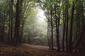 Nature forest with light