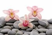Nature gray stones with three pink orchid