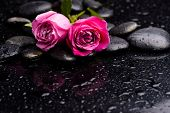 Two rose with pebbles and green leaf on wet background