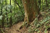 picture of rainforest  - Brazil  - JPG