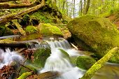 small mountain stream among green stones
