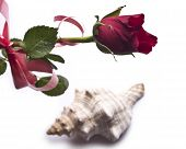 Red roses and shell