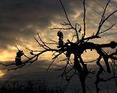 vine in autumn