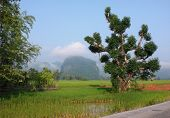 Roadside Scenery In Laos