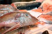 Fresh Fish On Sale In Fish Market In Southern Italy