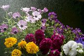 image of spayed  - watering with spray a bouquet of colorful flowers - JPG