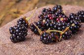 pic of blackberries  - fresh blackberries on of the field stone - JPG