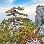 pic of crimea  - Rocky beach of Crimea with pinetrees over the sea - JPG