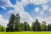 image of conifers  - Large clearing in the park among the conifers and deciduous trees on the background of the sky with clouds - JPG