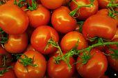 Vine-ripe cluster tomatoes