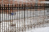 Reflections of railings as River Ouse bursts its banks. York, North Yorkshire, UK.