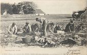 Potato Farmers In 1904