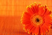 Orange Flower On Orange Background