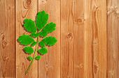 Summer or spring conceptual green leaf on a wood background, ideal for natural seasonal or vintage d