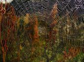 Web Rays