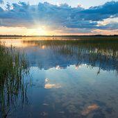Summer Rushy Lake Sunset View