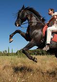 Rearing Stallion