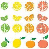 Set of citrus fruit