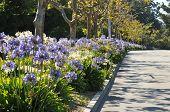 Boulevard Median hat Blumen und Bäume