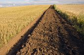 First Tillage Trench In The Crop Field
