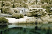 Japanese Garden In Infrared
